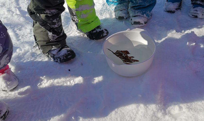 Beskyttet: Gruva leter etter ting som flyter/synker i vann
