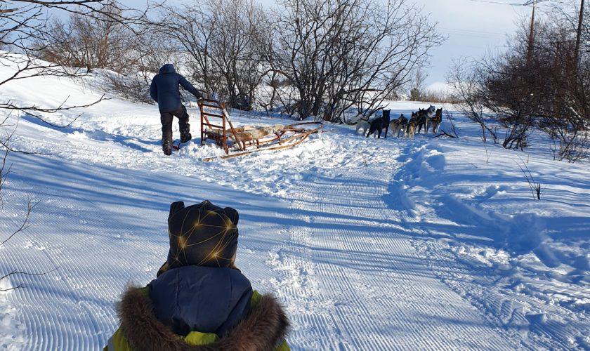 Beskyttet: Hundekjøring Malmen :)