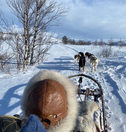 Flere bilder fra Malmen på hundekjøring